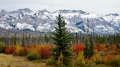 Fall in the Mountains (krystyna p) Tags: rockies fall autumn september alberta canada mountains bush buses shrub shrubs color colorful coulorful evergreen sony park national nationalpark jaspernationalpark canadianrockies jesień wrzesień góry kanada sonyalpha sonyilce5000 mirrorless weather travel flickr trees drzewo krzewy