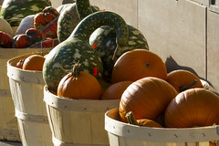 Baskets of pumpkins and gourds (jer1961) Tags: toronto bloorstreet baskets vegetablebasket pumpkin pumpkins gourd gourds