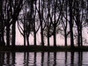 Reflected silhouette (locusmeus) Tags: 365 autumn trees water reflection silhouette biesbosch netherlands
