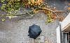 20171006-024 (sulamith.sallmann) Tags: pflanzen wetter ast autumn grüntalerstrase herbst pflanze plants rain regen regenschirm regentag sturm sturmschäden unwetter vogelperspektive weather berlin deutschland deu sulamithsallmann
