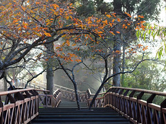Peaceful hike - Alishan (Chapo78) Tags: taiwan alishan path forest hike nature trees