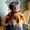 Happy Halloween! #purrantula #spidercat #halloweencostume #catcostume #happyhalloween #GingerCat #OrangeCat #OrangeTabby #Cat #kitty #OrangeTabbyCat #Cats #kittycat #OrangeCatsRule #CatsOfInstagram #Catstagram #catsagram #ネコ #ねこ #猫 #neko #garfieldcat (tiina2eyes) Tags: happy halloween purrantula spidercat halloweencostume catcostume happyhalloween gingercat orangecat orangetabby cat kitty orangetabbycat cats kittycat orangecatsrule catsofinstagram catstagram catsagram ネコ ねこ 猫 neko garfieldcat ifttt instagram