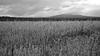 La campagne de Baie-St-Paul (bob august) Tags: 2017 2017©rpd'aoust août aperture3 bw baiestpaul blackwhite boiséduquai campagne canada champs charlevoix culture d90 église été format16x9 landscape nature nikkor1735mm nikon nikond90 noiretblanc promenade summer ville québec