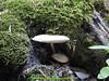 abetone (giordano torretta alias giokappadue) Tags: abetone bosco fungo montagna muschio verde