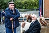 Ballinasloe Horse Fair (Clem Mason) Tags: festival ballinasloe horse fail galway 2017 october clemmason canon ngc