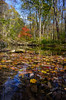 Fall on Birch Creek (Thomas Dwyer) Tags: birch creek landscape glenhelen preserve river fall woods nature thomasdwyer nikon fallcolor scenicsnotjustlandscapes