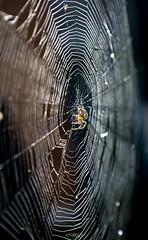 Spider & Web (deltic17) Tags: spider creature insect web nature trap arachnid catch canon