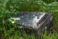 Amongst The Poison Oak (nedlugr) Tags: california ca usa sanluisobispocounty cemetery poisonoak shade shadows headstone green grass weeds lichens moss wildflowers