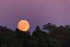 Harvest Moon (lilredlizzie) Tags: moon harvestmoon fullmoon beautiful pretty amazing sky skychasers skylovers sunset night nighttime nightonearth nightscene nightsky color colorful canon canon60d canonef70300 nature water massachusetts newengland woburn