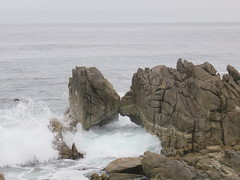 20160817 Californie Pacific Grove - (88) (anhndee) Tags: usa californie california pacificgrove