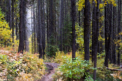 The burn in autumn. (Laura Jacobsen) Tags: chelansawtooths cooneylake foggydewtrail forest forestfire trail washington