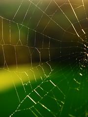 Spider's Web Raynox150 (mpb_17) Tags: