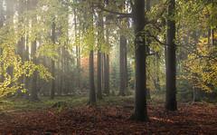 Autumn (mibreit) Tags: autumn fall forest woodland germany rhön nature