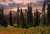 (MoodyGoat) Tags: washigton mountians cascades landscapepro