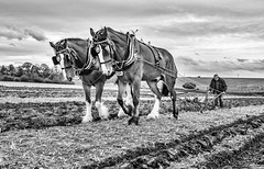 Ancient art of ploughing (jerry_lake) Tags: 173rdannualploughingmatchandshow 4thoct2017 d750 rsbaa royalsouthbucksagriculturalassociation fineartprocess silverefexpro2