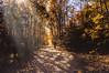 Autumn walk (Vanili11) Tags: matchpointwinner mpt593