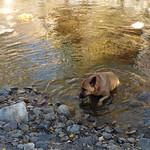 Sawmill Creek Trail thumbnail