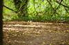 820 juillet 2017 - au bord du Cher entre Saint-Georges-sur-Cher et Chenonceau (paspog) Tags: cher france juillet july juli 2017 sousbois undergrowth feuillesmortes deadleaves