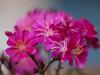 Quel mazzolin di fiori... (gaddi_luca) Tags: mazzolino lilla macro fiori vaso piccolo zuiko7518 olympus natura bokeh