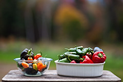 DSC_6062 (Kevin D Warren) Tags: peppers habanero ghost jalapeno bell garden harvest crop
