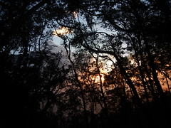 Sunset in the jungle (Christophe Maerten) Tags: colombia colombie jungle cauca huila  paramo tierra indiguena native people parque natural parc volcan volcano vulkaan valle de cocora sunset