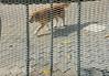Enjaulado (patosincharco) Tags: jaula profundidad perro