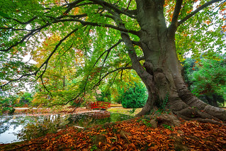 Old hornbeam -explored-