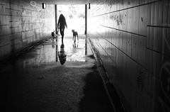 Silhouetten. (HansEckart) Tags: menschen hunde schwarzweiss silhouetten streetfotografie monochrome blackandwhite street tunnel urban