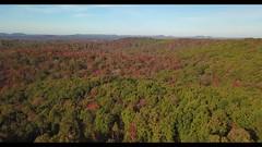 The View (player_pleasure) Tags: mavic drone autumn sciototrails statepark trees colors ariel