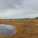 Autumn - Torronsuo National Park