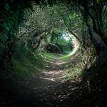 Le chemin creux... thumbnail
