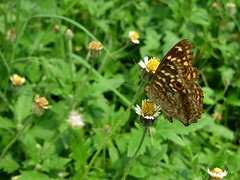 Butterfly (Siva301in) Tags: canon canonixus95is canonixus canonixus95 siva301in sivakumarbalasubramanian