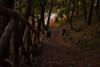 Mountain path (sashad97) Tags: mountain montagna scape landscape nikon d7200 35mm nikkon nikonflickraward autunno inverno october arancione giallo orange yellow street way path old abandoned addandonato nature natura beyondbokeh bokeh
