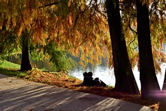 Love is in the air ! (fdlscrmn) Tags: love lovers lake park bucharest colours colorful happy shadows golden 7dwf autumn