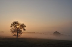 here come the sun (Uli He - Fotofee) Tags: ulrike ulrikehe uli ulihe ulrikehergert hergert burghaun nikon nikond90 fotofee plätzer meinweg nebel november morgensonne sonne sonnenlicht warmeslicht sonnenschein bäume feld felder licht schatten