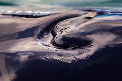 (Fifinator) Tags: blow hole orca killer whale killerwhale blackfish