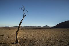 Aus 7 (Sentinel7) Tags: aus namibia desert landscape drought trees