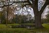 Herbst (annareinert) Tags: teich wasser gewã¤sser gewaesser baum baeume bã¤ume eiche stattlich natur landschaft spiegelung wasserspiegelung jahreszeit herbst herbstfã¤rbung herbstfaerbung ahaus mã¼nsterland muensterland nordrheinwestfalen deutschland gewässer bäume herbstfärbung münsterland