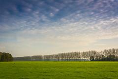 Treeline (stevefge) Tags: beuningen landscape nederland netherlands nl nederlandvandaag trees bomen fields sky gelderland