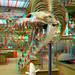 Museum National d'Histoire Naturelle Paris 3D