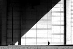 below the line (pascalcolin1) Tags: paris bercy homme man soleil sun lumière light ombre shadow mur wall photoderue streetview urbanarte noiretblanc blackandwhite photopascalcolin