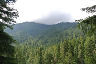 Olympic Mountain Dreams day 4 - Mist rolling over the tree covered mountains