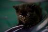 Baby black (PILIRUBIO) Tags: ltytr1