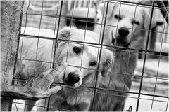 vita al rifugio (andaradagio) Tags: andaradagio bianconero bw canon dog cane miglioramicodelluomo nadiadagaro canonef50mmf18