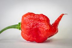 Carolina Reaper (stankar) Tags: carolina reaper superhot chilli pepper homegrown world hottest