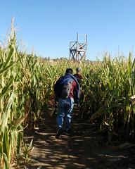 026 Head For The Lookout Tower (saschmitz_earthlink_net) Tags: 2017 california temecula bighorsefeedandmercantile cornmaze orienteering laoc losangelesorienteeringclub corn