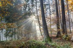 Herbstwald Hinterland 171018 (Bianchista) Tags: 2017 bianchista bunt herbst holzhausen laub oktober wald hinterland forrest indiansummer autum tree holz wood nebel fog baum