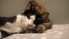 relax (Mara Miao) Tags: sonno lovers love kittens cats animals bed tired sleep gatti sweet animali domestici