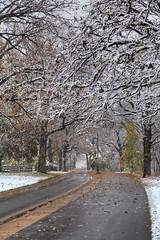 First Snow 10-27-2017 026 (wogggieee) Tags: bear lake mn minnesota white whitebearlake colors county fall hugo pretty ramsey snow trees washington winter unitedstates us