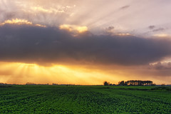 The Halloween Party (Alfred Grupstra) Tags: nature sunset agriculture ruralscene cloudsky sky field landscape sun outdoors farm summer sunlight dusk sunrisedawn scenics land cloudscape weather meadow 999
